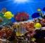 شعاب مرجانية في البحر الأحمر