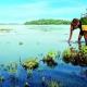 رحلات شهر العسل سريلانكا - فندق نيبون