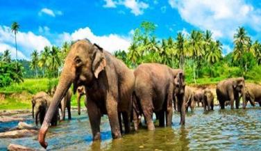 السياحة-في-سريلانكا
