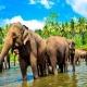 رحلات شهر العسل سريلانكا - فندق رامادا