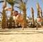 الكرة الشاطئية - فندق سندباد - الغردقة - اجاز